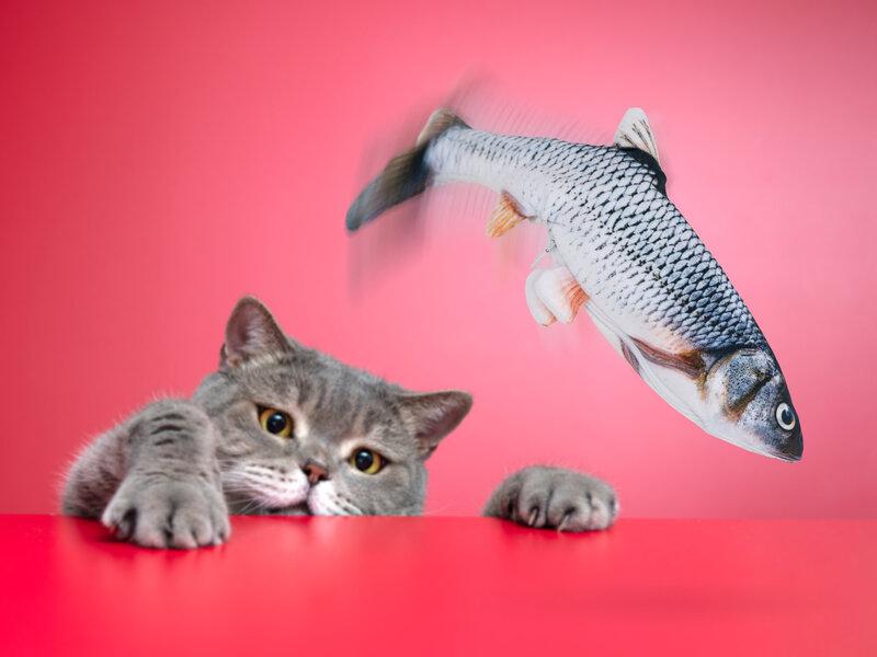 Spralla Sprællende Fisk Kattelegetøj