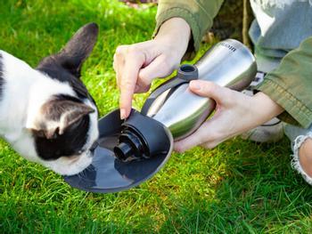 Utenu Vandflaske til Hund