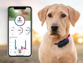 Tractive GPS-tracker til Hund