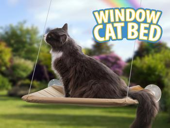 Katteseng Til Vindue